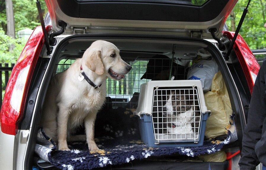Перевозка кошек и собак на дальние расстояния