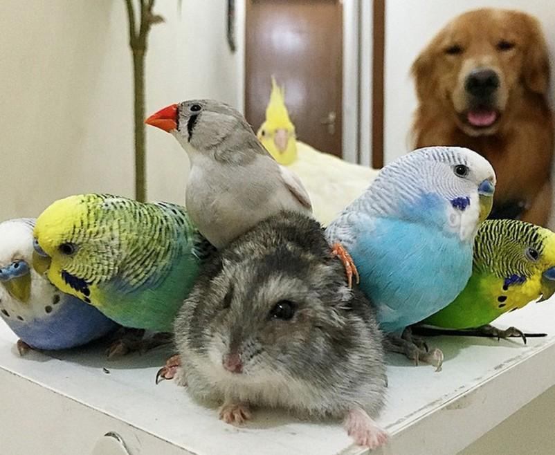 Попугаи и грызуны – домашние любимцы