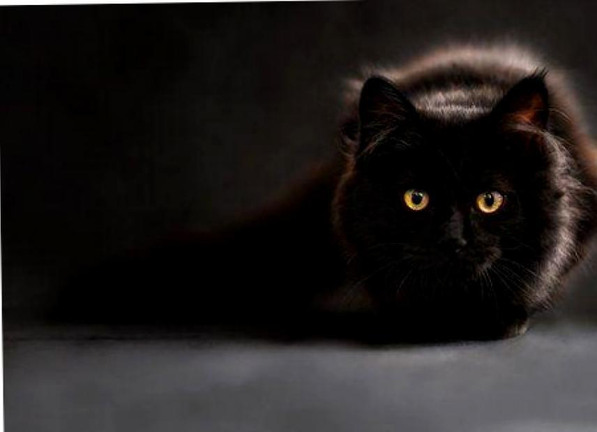 Разговоры с мертвыми и другие необычные способности кошек