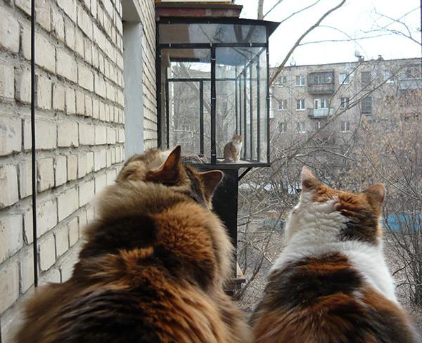 Права для содержания кошки, категория «К»
