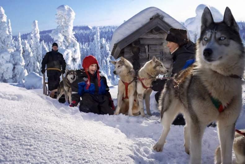 Финское собачье счастье
