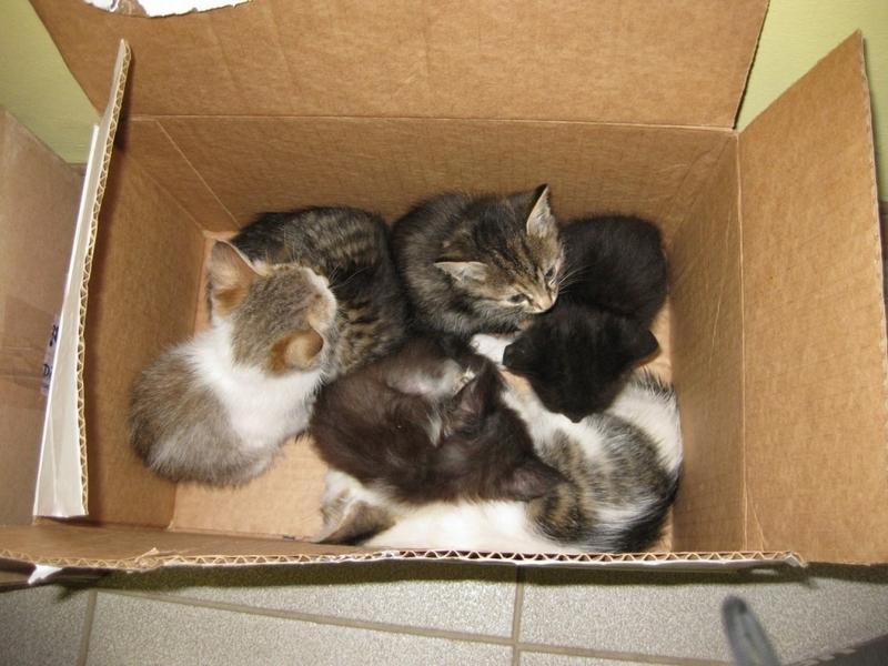 Вы всё ещё верите в добрых тётенек, берущих котят на пристрой?