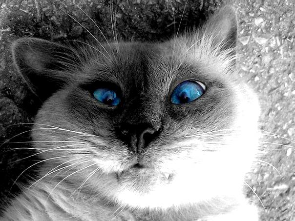 - У вас котик косой? - Нет, просто у него свой взгляд на жизнь!