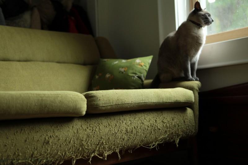 Как выбрать диван, который кошка не будет драть?