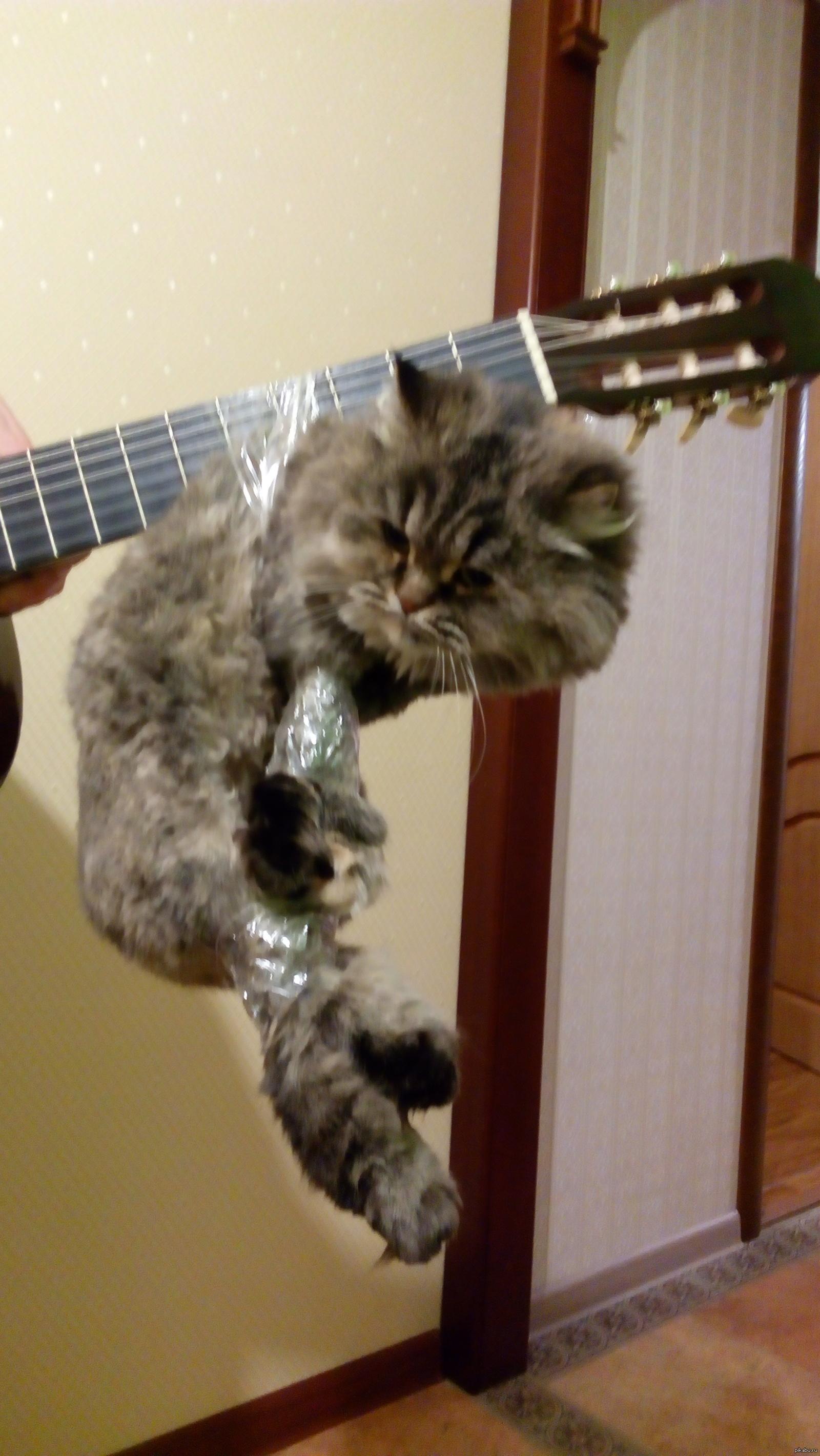 Меня бесит, когда говорят, что у кошки 9 жизней!