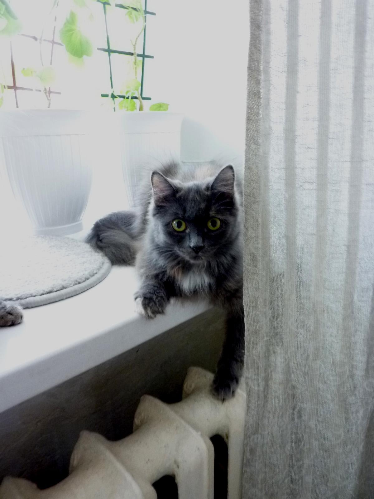 Ловит ли мышей кастрированный кот?