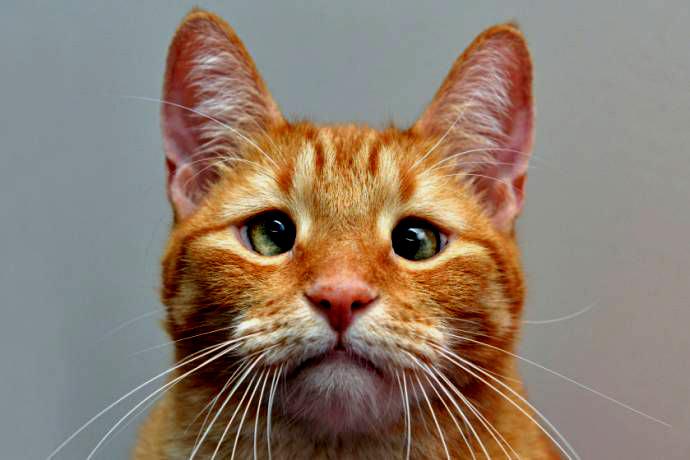 Котики-косеньки…
