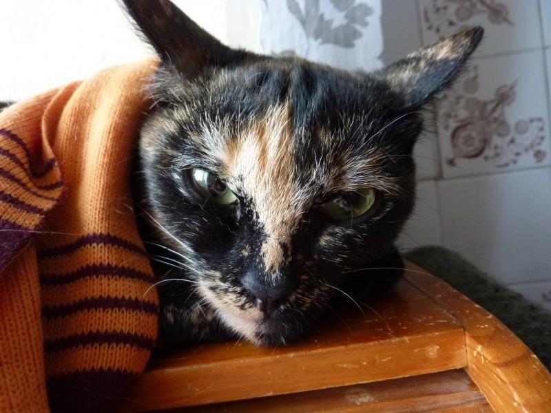 Обвинила ветеринара, что деньги взял, а кошку не стерилизовал…
