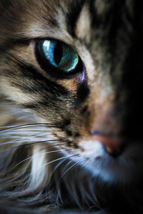 Кошки - совершенны!
