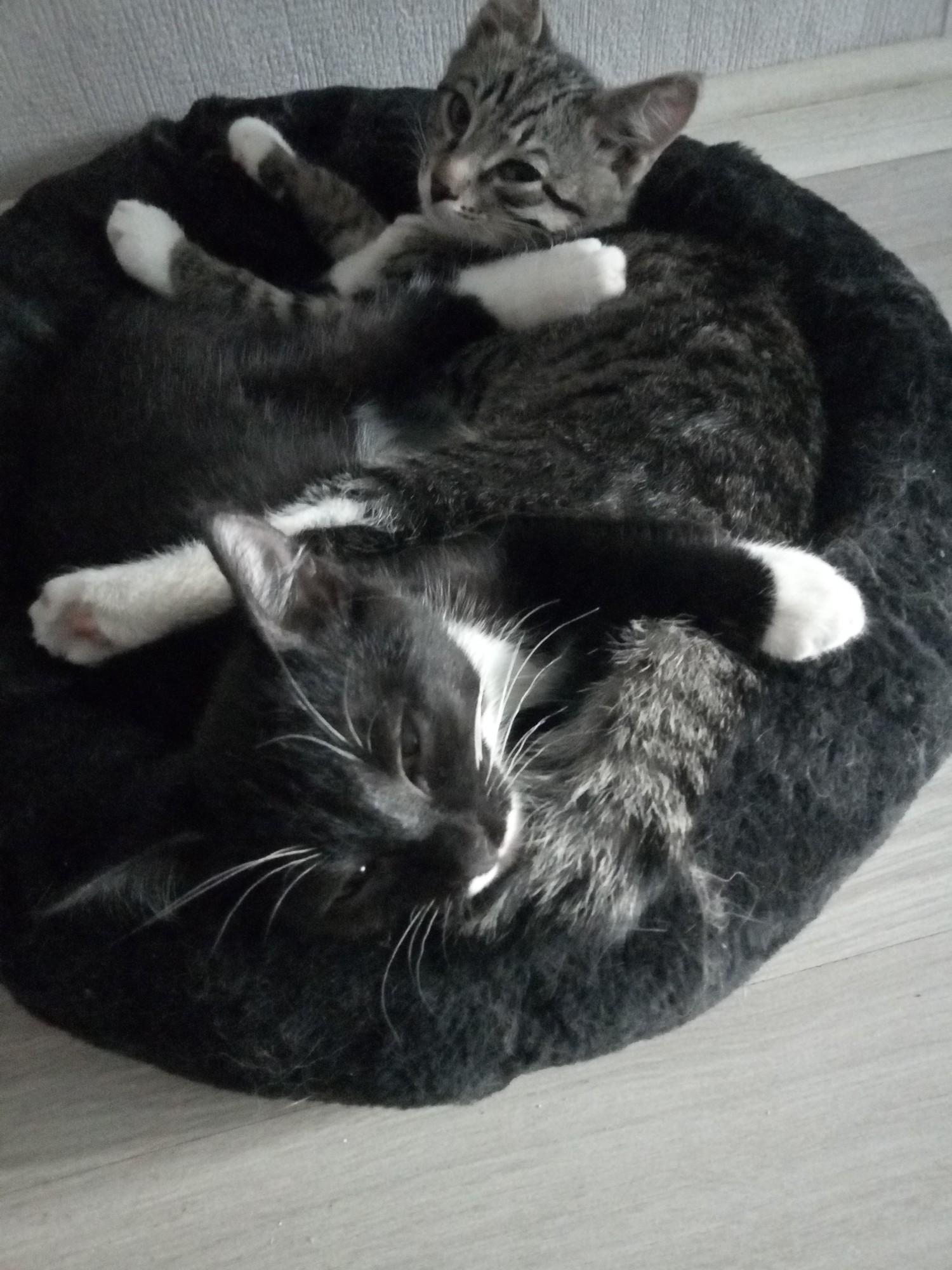 Играющие котята - лучшая таблетка от депрессии!