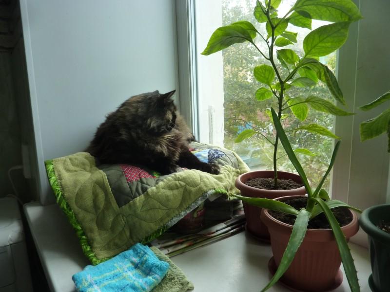 Осенью кошки не отдыхают…