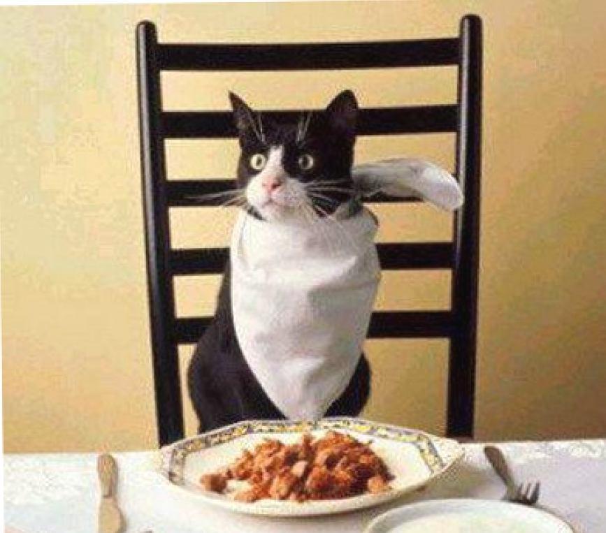 Кушать подано или как не сгубить любимого котика