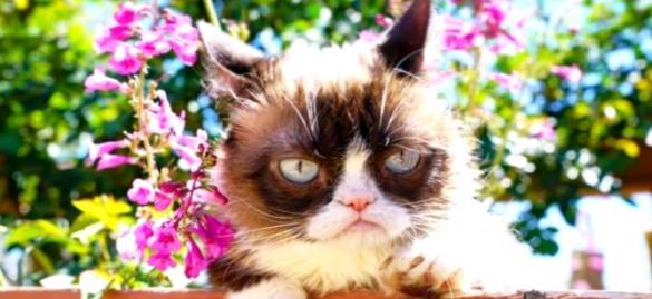 Грампи Кэт: история успеха сердитой кошки