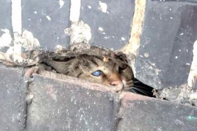 Подвал как роддом для бездомных кошек
