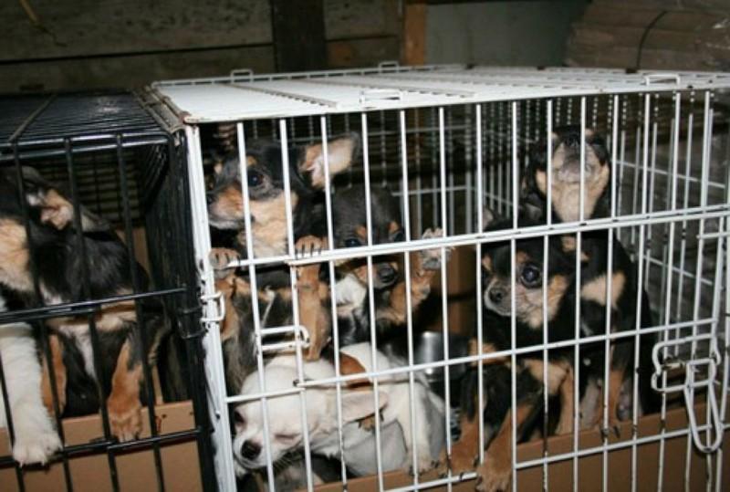 Запретили продавать животных!