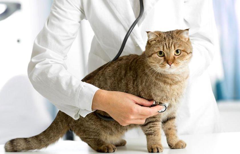 Всех излечит, исцелит добрый доктор Айболит: как выбрать хорошего ветеринарного врача