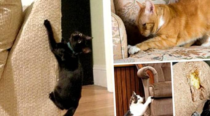 Как отучить кота царапать мебель