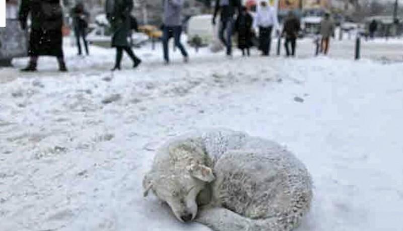 Пустите собаку погреться в морозы в подъезд!