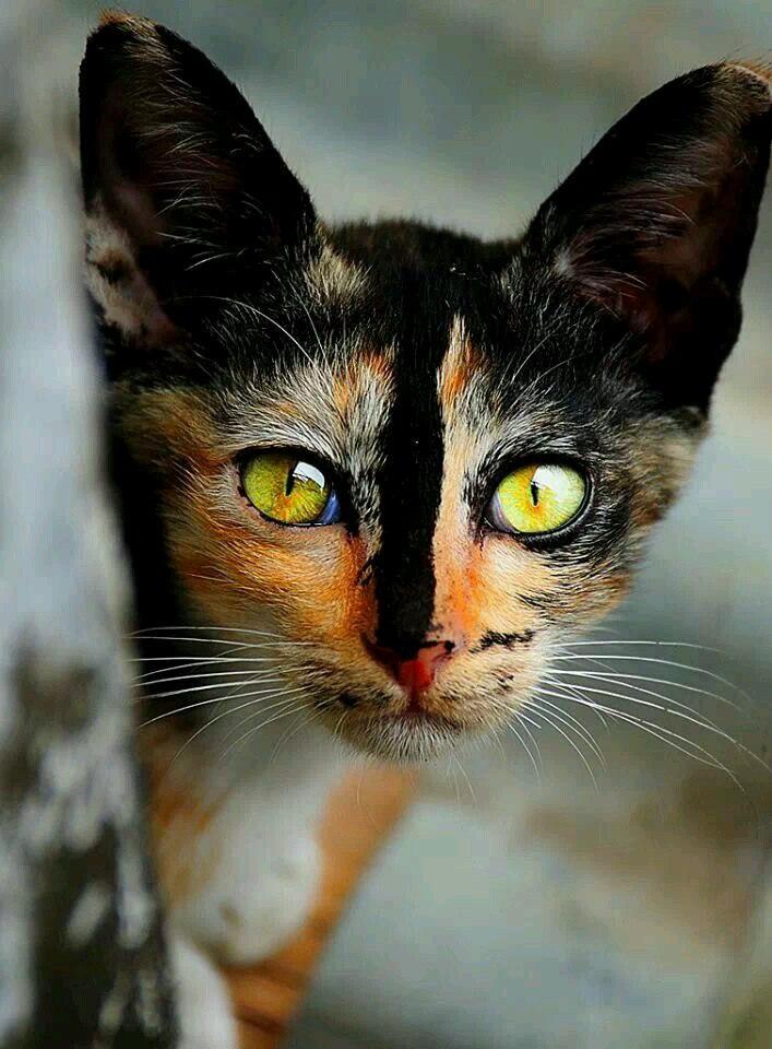 Совершенство кошек бесконечно!