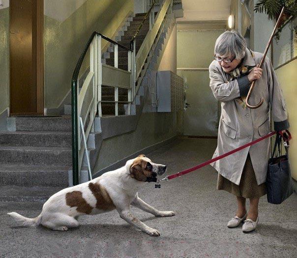 Привязали собаку у магазина? Попрощайтесь!