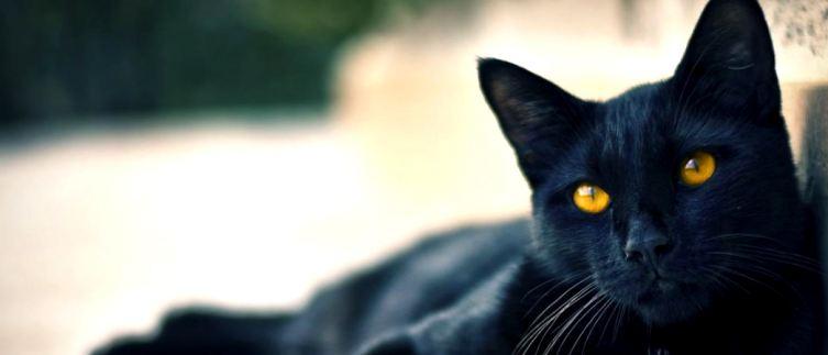 """""""Черная кошка в доме живет - много возлюбленных женщину ждет"""" и другие кошачьи приметы"""