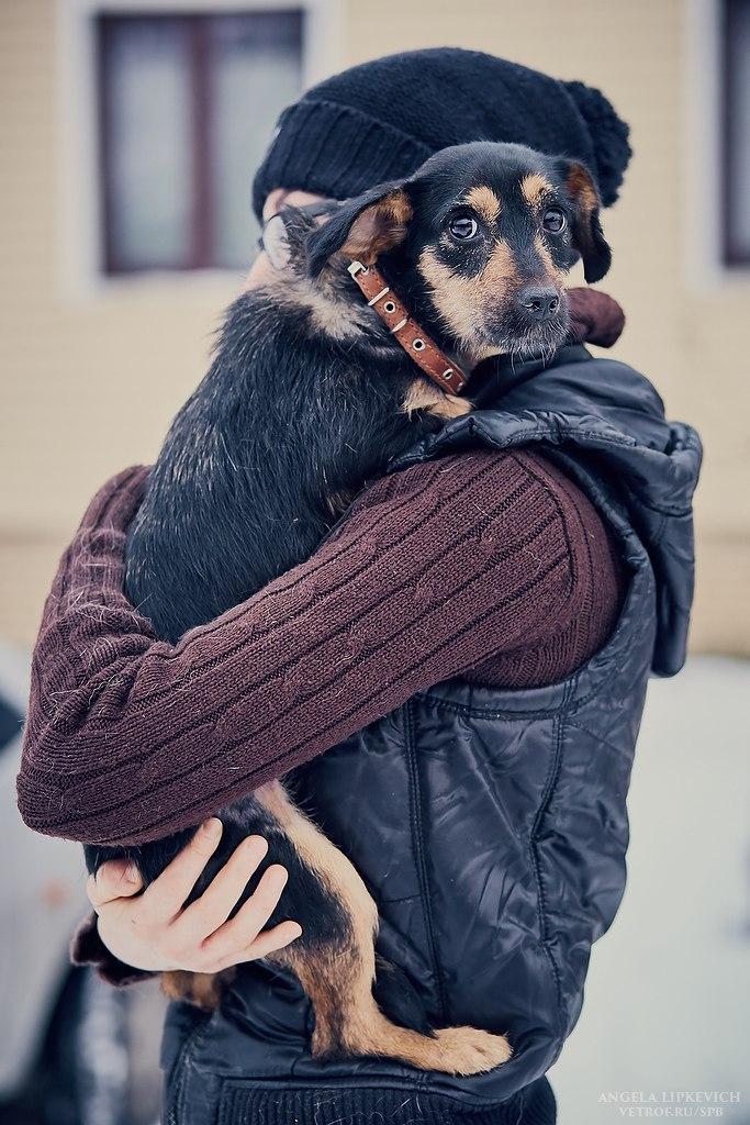 Шведы даже не понимают, как собака может быть бездомной