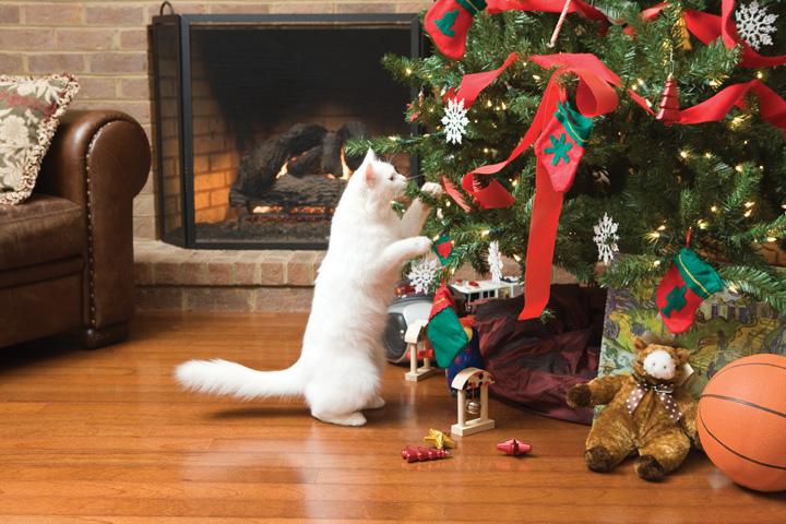 Праздник начинается: берегите своих кошек от гостей!