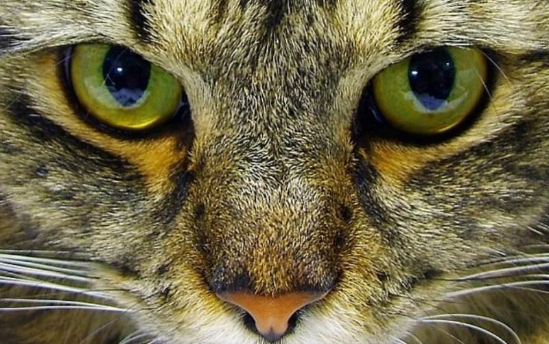 Кошка: ведьма или хранительница?