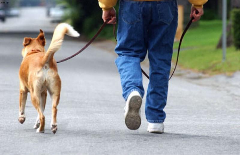 Потому что дома вас ждёт собака…