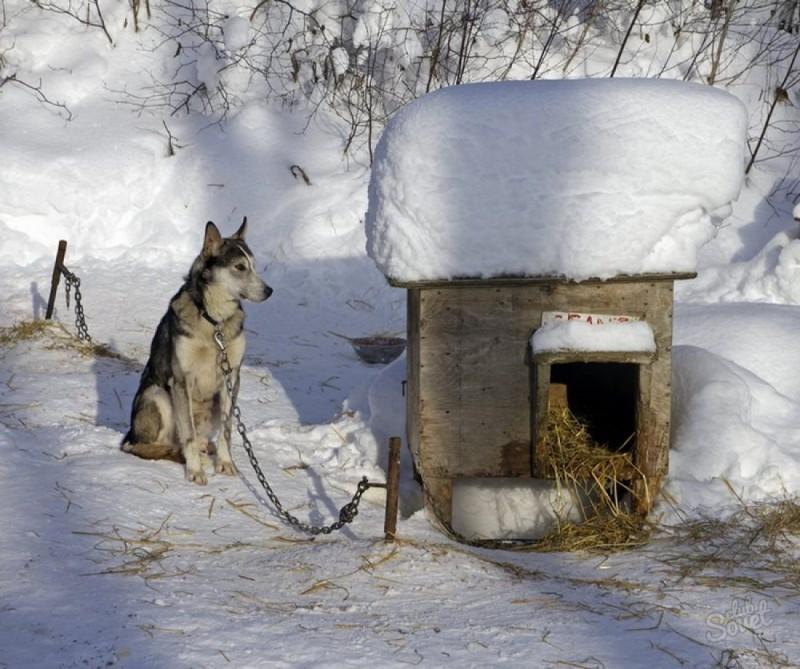 Как правильно жить на улице …. зимой