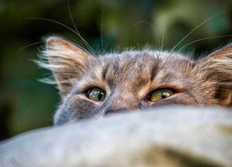 Кошку против шерсти не гладят!