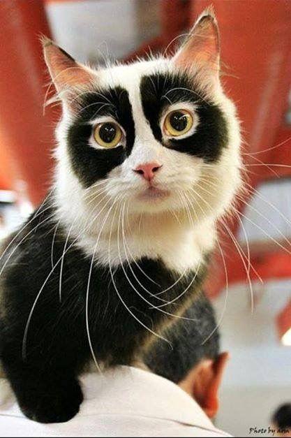 Сегодня покажу эксклюзивных кошек