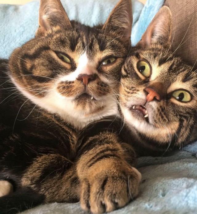 Кошачья ревность