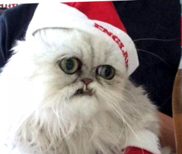 Уилфред: самый страшный кот в мире
