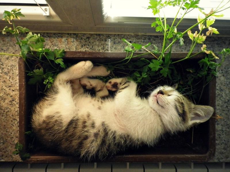 Рассаду от кошки, защитить, конечно, можно,