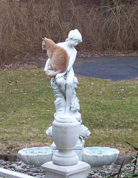 Кошки неравнодушны к памятникам...