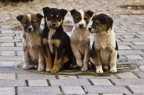 Опекун для бездомного пса – новый опыт спасения
