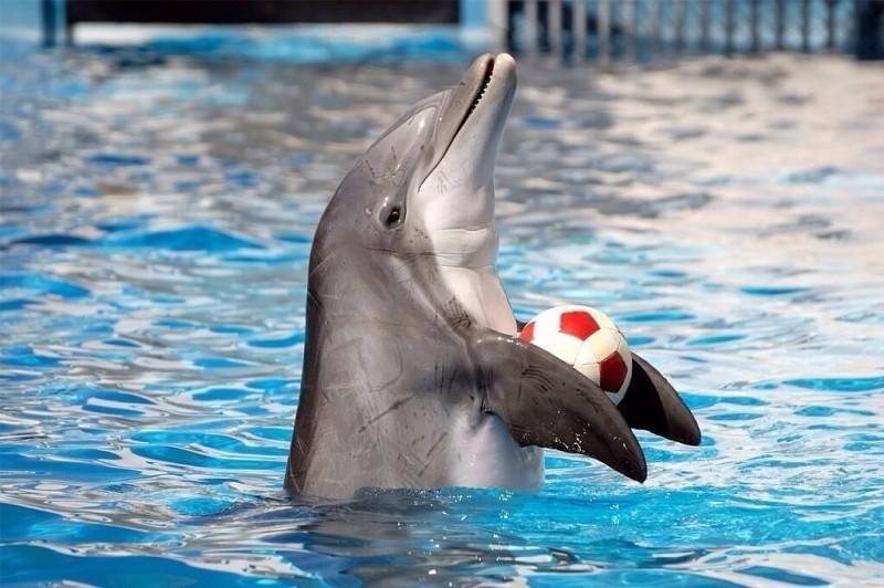 И мы всё ещё строим дельфинарий – тюрьму для друзей?