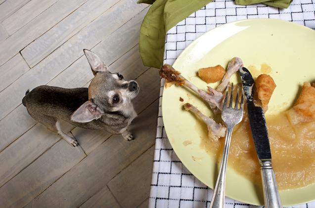 Предрассудки ценою в собачью жизнь