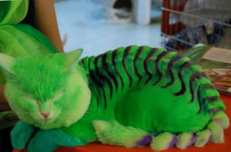 Скальпель для кошки или 4 верных способа изуродовать своего питомца