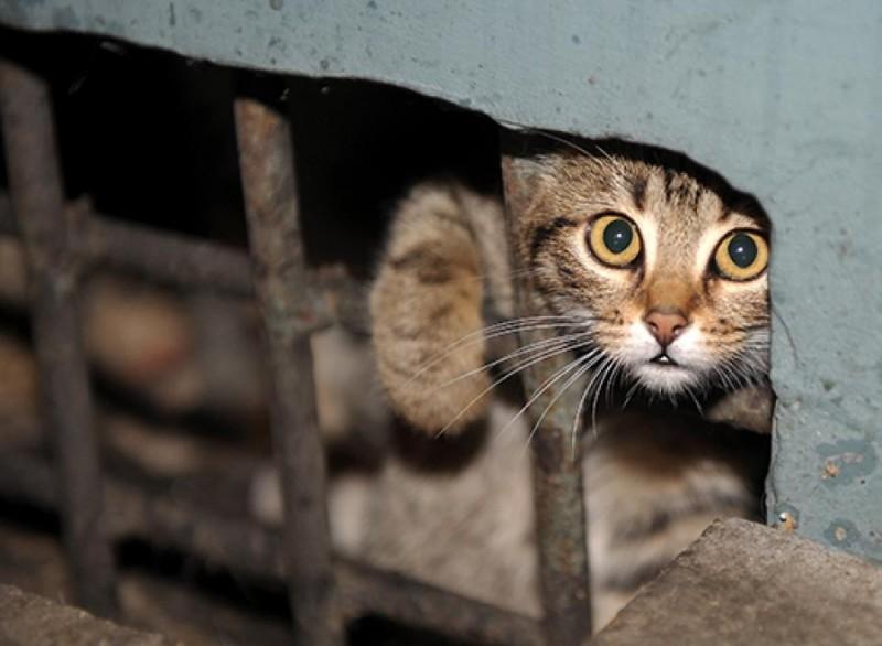 Зачем кошкам открытые подвалы?