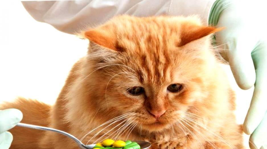 Предупрежден - значит вооружен: самые часто встречающиеся болезни у кошек