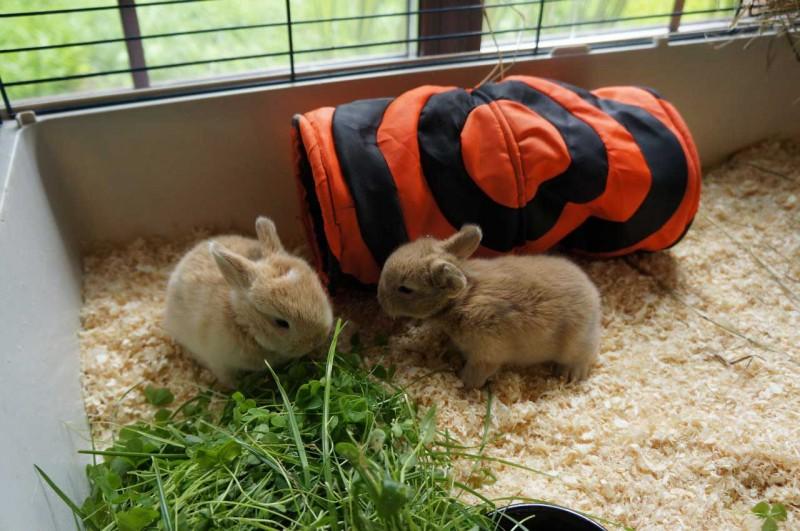 А не завести ли на даче кроликов?