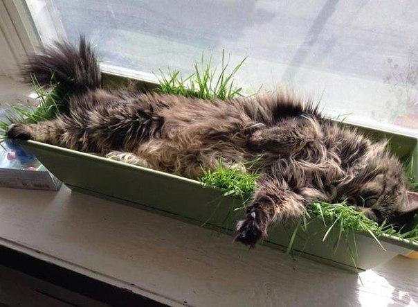 Купи ящик для рассады – получи кота в засаде!