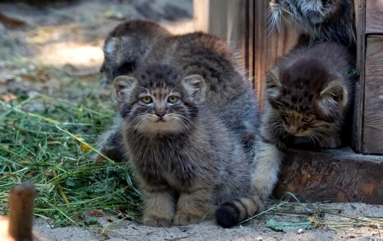 Кошки и их приемные дети: необычные истории усыновления