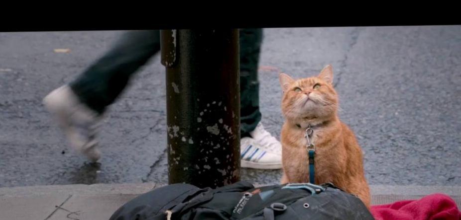 Уличный кот по кличке Боб: история одного спасения
