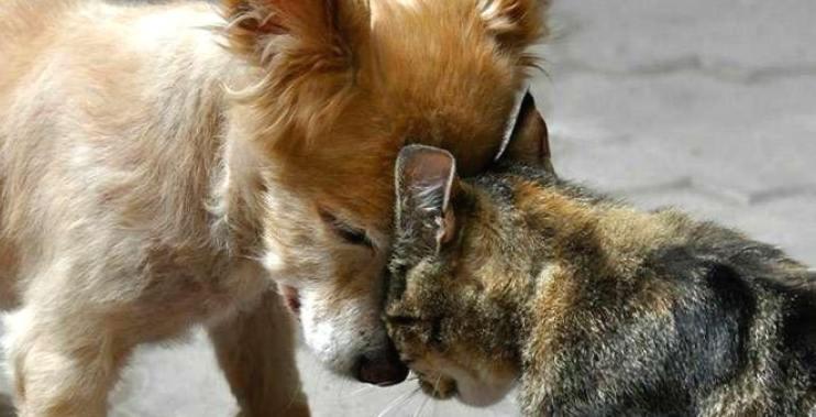 Как кошка с собакой: да или нет? Как подружить питомцев