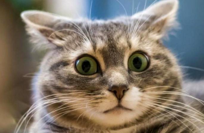 Увеличить кошке губы: чем закончился скандал в московском салоне красоты