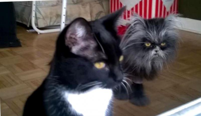Кошка из фильмов ужасов или пугающая красота Муни