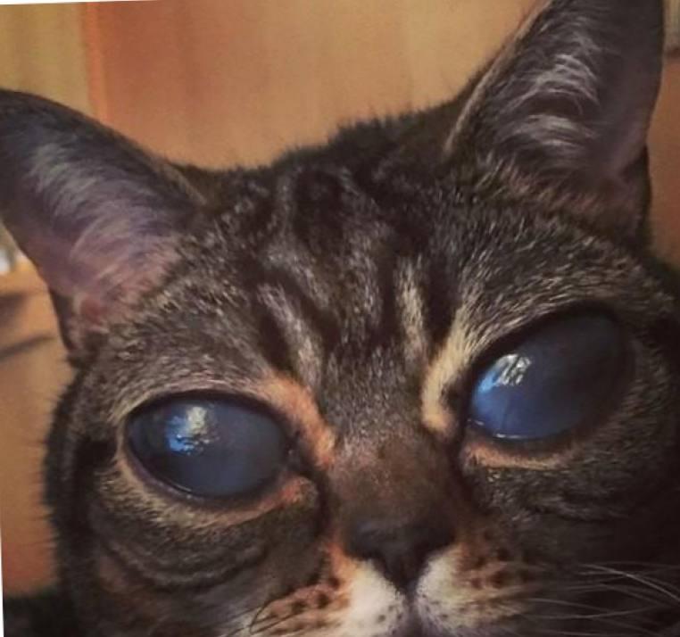 Неземная красота или как кошка лишилась своих огромных глаз